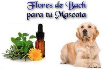 Flores para tu Mascota